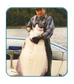 Halibut in Alaska