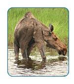 AlaskaCruises.com Alaska FAQs.